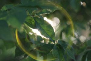 bubble-tree